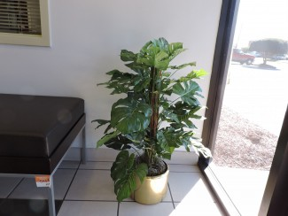Artificial office floor plant in Richmond VA