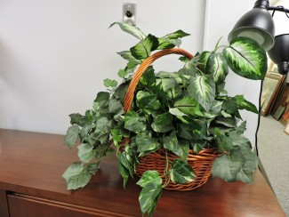 Artificial plant basket in Richmond VA
